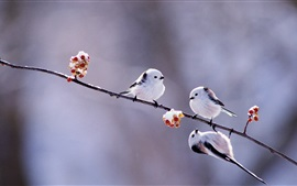 Preview wallpaper Winter birds, white feathers, twigs, snow, berries