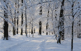 Preview wallpaper Winter forest, thick snow, trees, nature