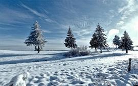 Invierno, nieve, árboles, rayos del sol