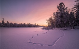 Winter, snow, trees, sunset