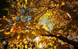 Preview wallpaper Yellow leaves, birch, trees, sun rays, autumn