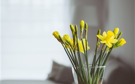 Yellow narcissus flowers, vase