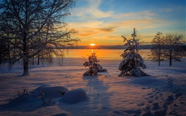 Preview wallpaper Arvika, Sweden, winter, snow, trees, sunset