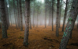 Preview wallpaper Autumn, forest, trees, fog, dawn