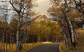 Autumn, road, birch forest, mountains