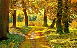 Preview wallpaper Autumn trees, path, grass, yellow leaves