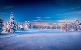 Beautiful winter landscape, trees, spruce, snow