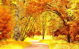 Березовый лес осенью, желтые листья