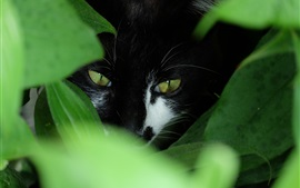 Preview wallpaper Black cat hidden in the grass