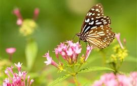 Mariposa y flores de color rosa, alas