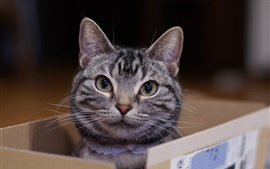 Preview wallpaper Cat in box, look out