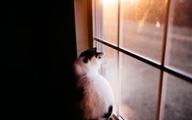 Кошка в комнате смотрит в окно