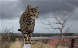 Preview wallpaper Cat standing on the fence top look around