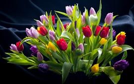 Tulipas coloridas, vermelho, rosa, roxo, flores amarelas