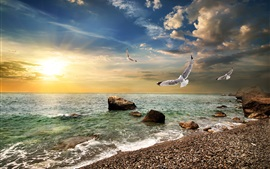 Preview wallpaper Crimea, sea, beach, coast, waves, seagulls, sunset