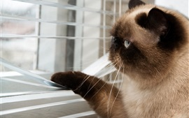 Preview wallpaper Cute cat look to the window
