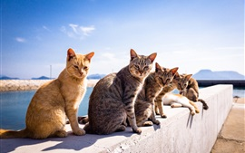 Preview wallpaper Cute cats under the sunshine