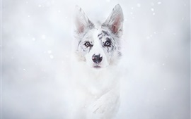 Preview wallpaper Dog in winter, snow, face, front view