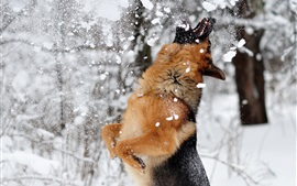 Preview wallpaper Dog play snow