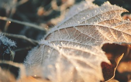 Preview wallpaper Dry leaf, frost