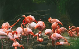 Flamingo photography, birds