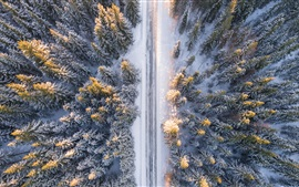 Preview wallpaper Forest, trees, top view, snow, road, winter