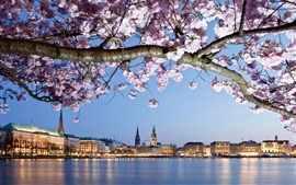Germany, Hamburg, flowers, river, city, houses, lights