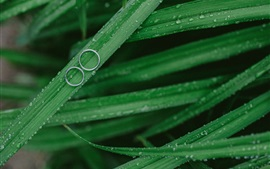 Preview wallpaper Green grass, dew, rings