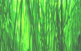 Preview wallpaper Green grass macro photography, spring
