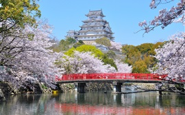 Preview wallpaper Himeji City, Japan, spring, flowers, bridge, river