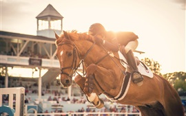 Preview wallpaper Horse race, riding, sport