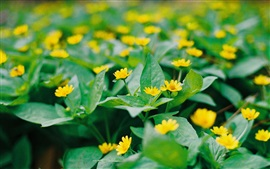 Preview wallpaper Little yellow flowers, green leaves