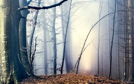 Morning, forest, trees, path, fog, autumn