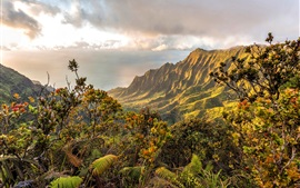 Mountains, bushes, clouds, sea, coast, Hawaii, USA