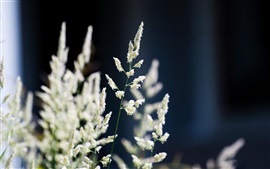 Nature, white flowers, grass, bokeh