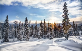 Norway, Trysil, winter, snow, trees, forest, sunset