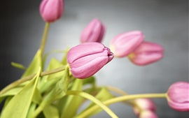 Preview wallpaper Pink tulips, flowers, stem
