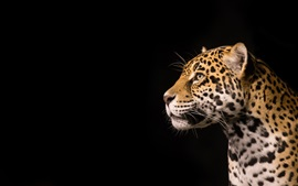 Preview wallpaper Predator jaguar, black background
