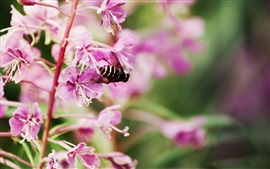 Preview wallpaper Purple flowers bloom, bee, spring