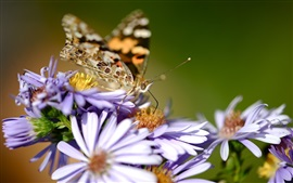 Purple flowers, butterfly, wings, blurry background