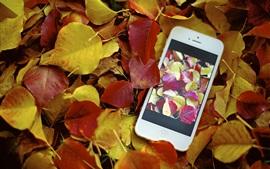 Hojas rojas amarillas, otoño, iPhone