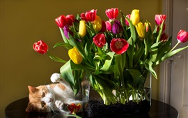 Red yellow purple tulips, flowers, bouquet, cat