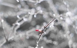 Snow, twigs, berries