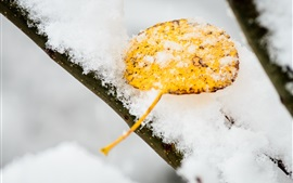 Snow, yellow leaf, winter