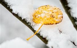 Aperçu fond d'écran Neige, jaune, feuille, hiver