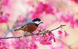 Spring, flowering, pink flowers, bird