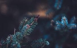 Preview wallpaper Spruce twigs, needles, green, bokeh