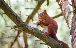 Ardilla en el árbol, comer alimentos