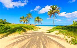 Preview wallpaper Summer, tropical, palm trees, sands, sea, beach