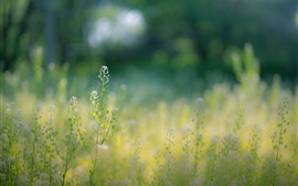 Summer, wildflowers, grass, bokeh